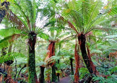 Bosque de Helchos